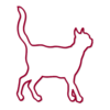 kitty in NY - Cat Care Services in New York