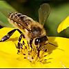 East Waterford Beekeepers Association