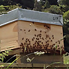 Bee Business Blog - Business of Bees