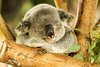 Chubby Botak Koala | Singapore Food Blog, Travel and Lifestyle