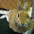 Rabbit Ramblings