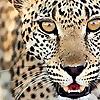 The Wildlife Photographer | Andrew Forsyth