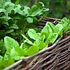 My Food Garden |  Organic gardening and urban farming services
