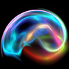 The Neuropsychotherapist | The Neuroscience of Psychotherapy