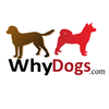 WhyDogs.com - All About Dogs.