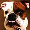Simpawtico Dog Training