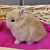Sea2Sky Rabbitry