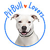 Pit Bull Information – Your complete online resource