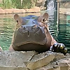 The Cincinnati Zoo Blog