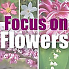 WFIU | Focus on Flowers