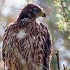 Darley Dale Wildlife