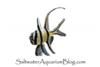 Saltwater Aquarium Blog
