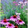 Moonwise Herbs