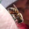 Mud Songs Beekeeping