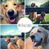 MyDogLikes | Pet Product Review and Guide Blog