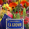 Origin Matters   Advocating for America's Flower Farmers