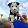 Top Dog Training RSS Feeds