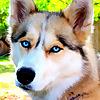 Gone to the Snow Dog | Dog Vlog
