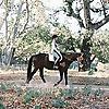 Saddle Seeks Horse   Equestrian Lifestyle Blog