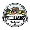 BrindleBerry Dog Photography
