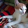 Hey meow - Crazy cat lady's blog