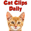 Cat Clips Daily