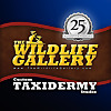 TheWildlifeGallery