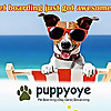 PuppyOye| Dog Boarding, Dog Daycare, Dog Training, Dog grooming