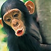 Primatology.net | We ain't monkeyin' around here