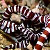 No Bones   Department of Invertebrate Zoology News