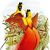 International Commission on Zoological Nomenclature