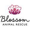 Blossom's Animal Rescue