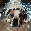 Grass Roots Rescue | Delaware Animal Rescue