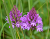 Bewdley Orchids - Orchid blog from Bewdley