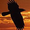 RavensNewLife