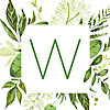 Well in the Wilderness Young Living Essential Oils