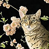 The Art Hutch Blog | Kelly Archer Wildlife & Pet Portraits