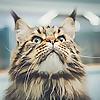 Cambridge Cat Clinic Blog