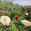 bgss.ca | Botanical Gardens of Silver Springs | Calgary Gardening Blog