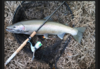Wisconsin Fishing Reports | Wisconsin Fishing Blog