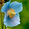 Irish Garden Plant Society   Ireland Gardening Blog