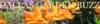 DALLAS GARDEN BUZZ   North Texas Water Wise Gardening Blog