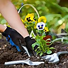 Blue Grass   Calgary Gardening Tools Blog