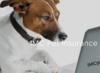 IMC Pet Insurance Blog