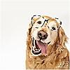 Pawsh Magazine | A New Breed of Dog Magazine