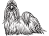Shih Tzu Official