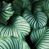 Simply Green Milo | Minimalist Zero Waste Lifestyle Blog