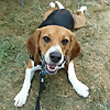 Beagle Baby Beastie