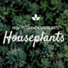 Exotic Tropical Houseplants
